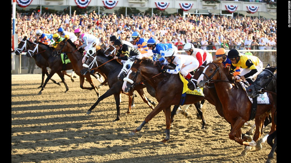 The horses take to the track at the begining of the race.