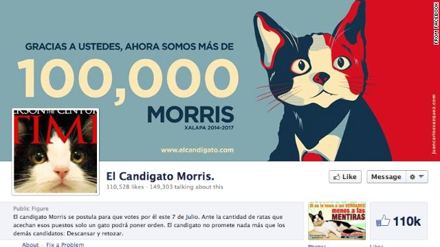 Morris the cat has garnered more than 100,000 likes on his Facebook page.