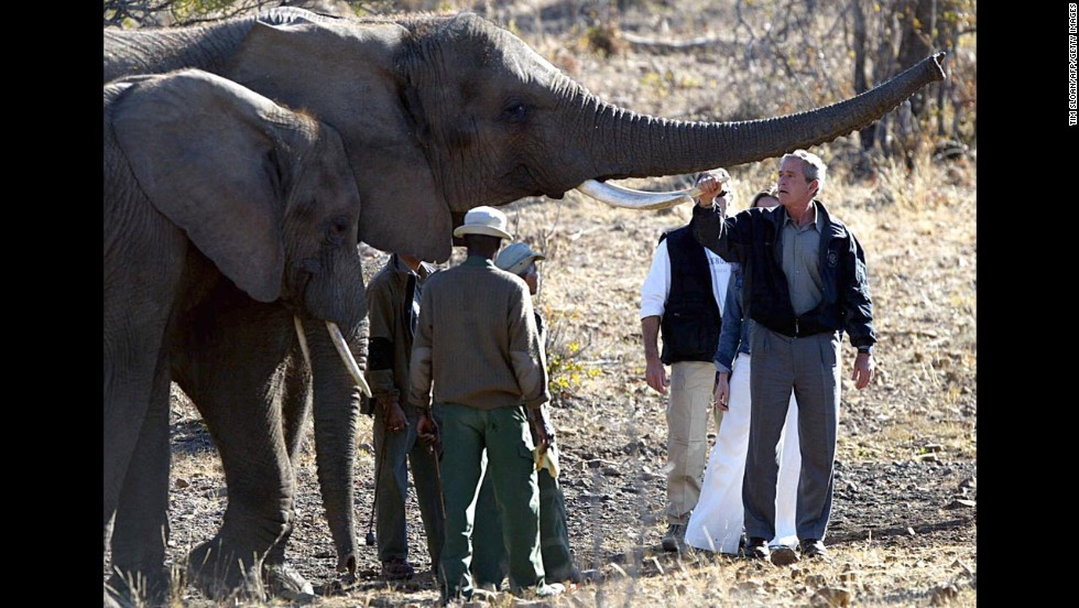President Bush holds the tusk of an elephant while touring the Mokolodi Nature Reserve in Gaborone, Botswana, on July 10, 2003.