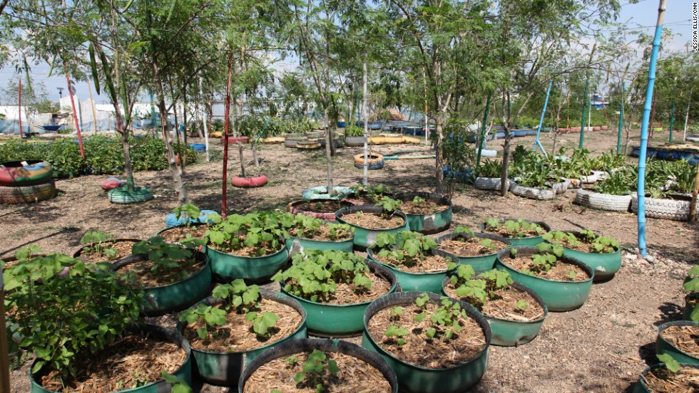 A range of vegetables and herbs are grown in the garden including eggplant, radishes, basil and parsley.