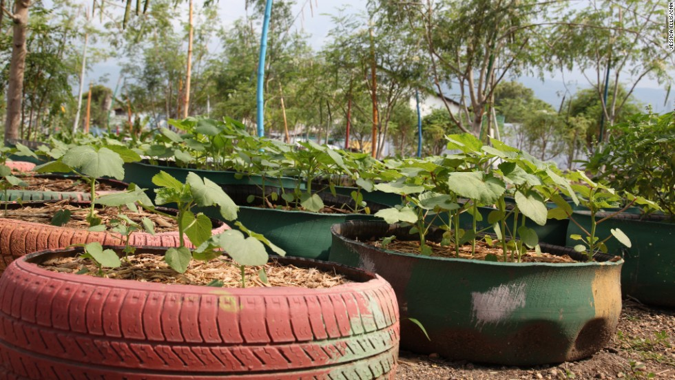 The garden was founded in 2011 and most of the produce is used for a soup kitchen. Any surplus is sold at market.