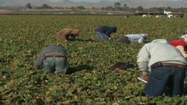 cnnee alvarado us farmworkers sexual harassment_00000611.jpg