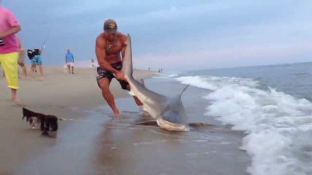 nantucket man wrestles shark cnn man wrestles shark finds fame