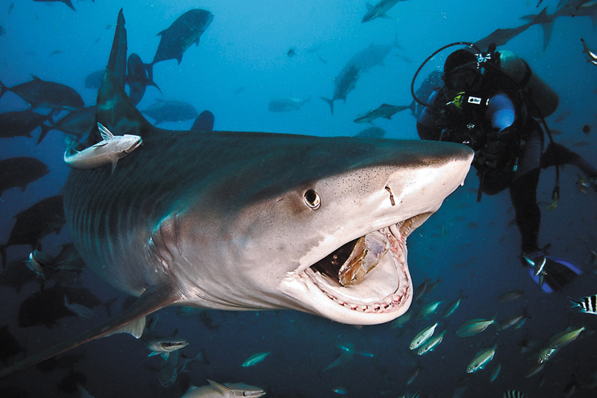 Swimming With Sharks Where To Go CNN Travel - 10 awesome aquariums where you can spend the night with sharks