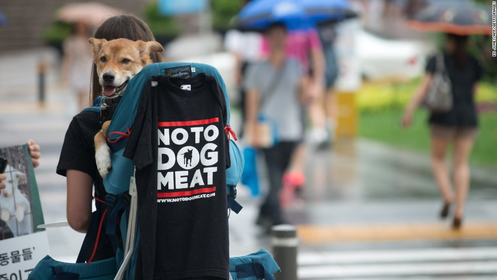 A protester carries a dog on her back during an animal rights protest in Seoul.
