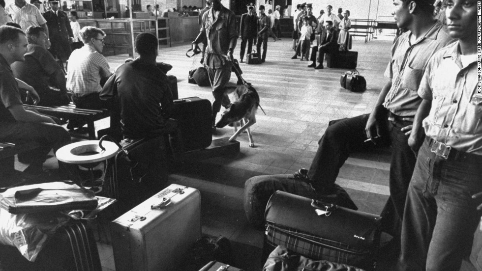 Police dogs trained to smell out hidden marijuana examine U.S. soldiers' luggage at the airport during the Vietnam War in 1969. Drug use was widespread during the war.