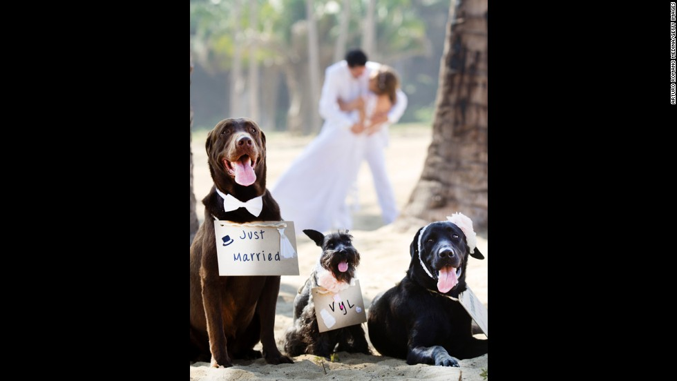 Pets can be a droll inclusion in wedding photos.