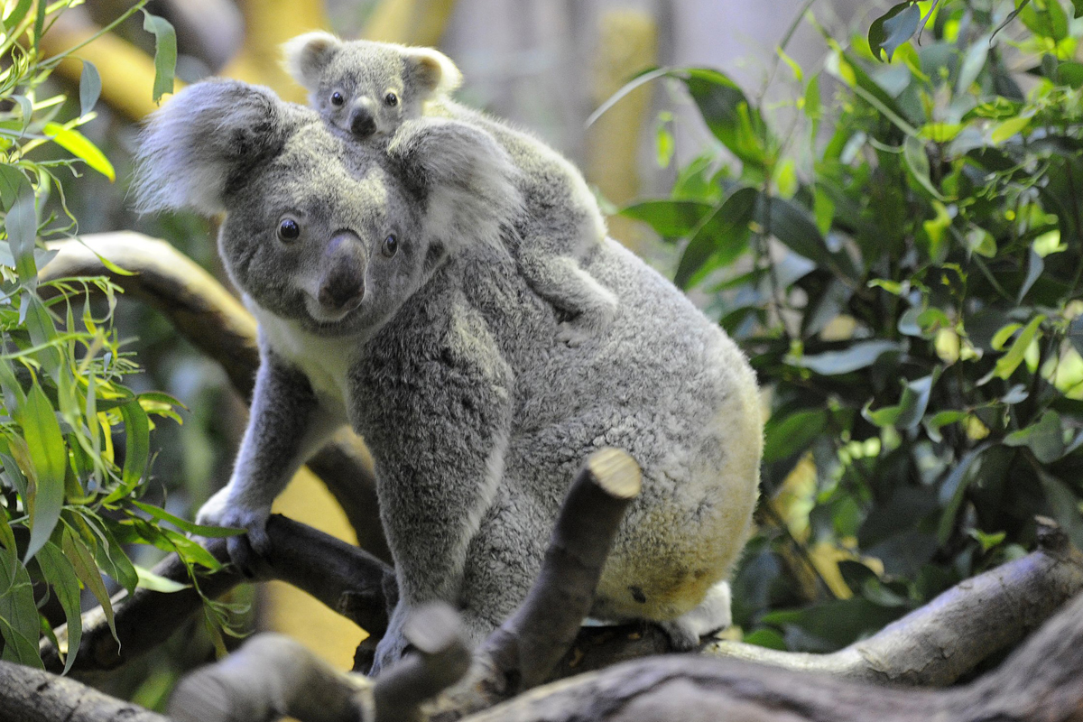 Are these the world's cutest creatures? | CNN Travel