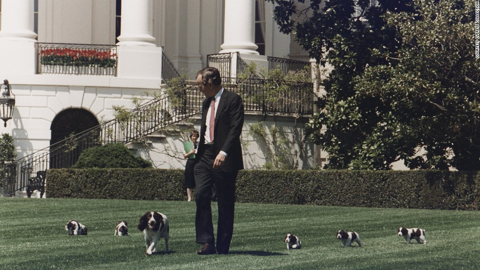 President George H.W. Bush walks on the South Lawn of the White House, followed by his dog Millie and her puppies.  In 1989, Millie gave birth to a litter of six puppies, including Spot, who later returned to the White House with President George W. Bush.