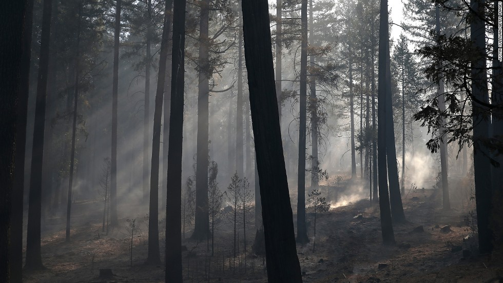 Sunlight filters through smoke in a grove of trees burned by the Rim Fire on August 22, in Groveland, California.