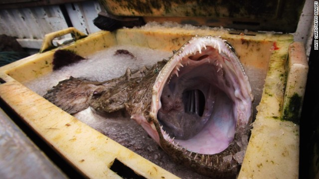 The monkfish ... probably wouldn't get by on its looks