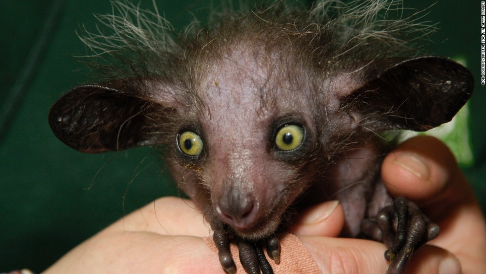 Search for the world's ugliest animal - CNN