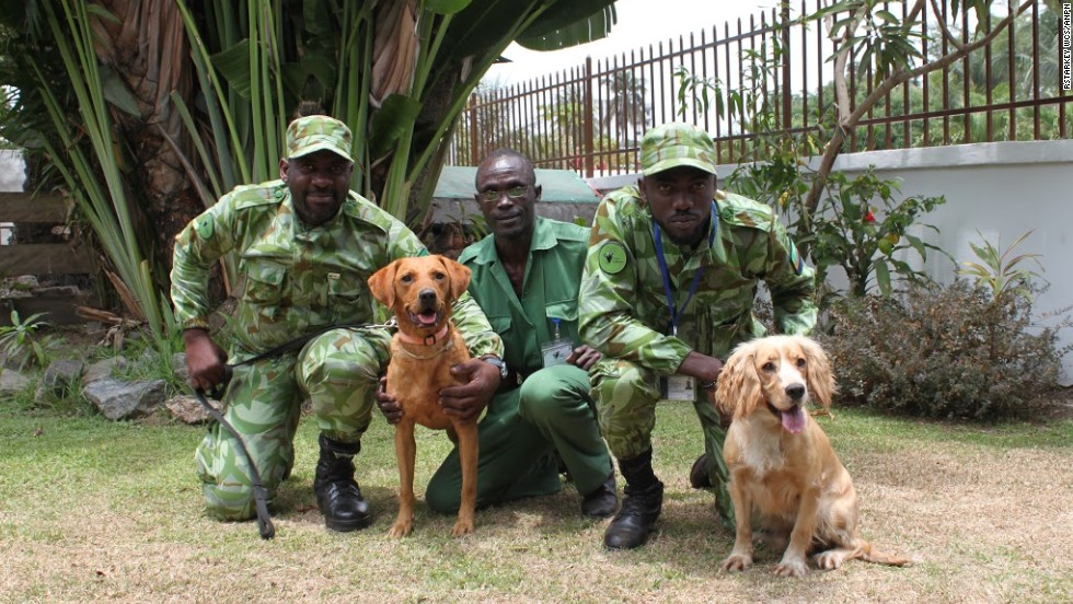 Meet Lumi (right) and Cooper (left), Gabon's newest weapons in the fight against rampant poaching.
