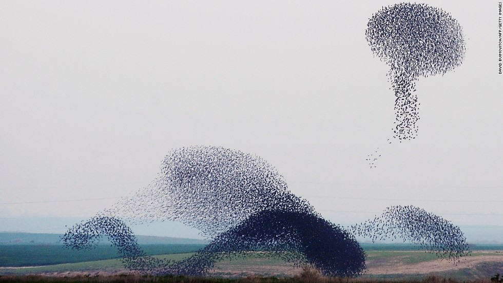 When starlings make their yearly winter migration, they travel en-masse. Some equate their unusual formations to an aerial ballet. Last January, they traveled to Israel -- the first time they'd visited the country in 20 years.