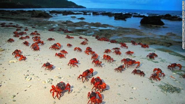 Splendide migrazioni di animali che spingono le persone a radunarsi