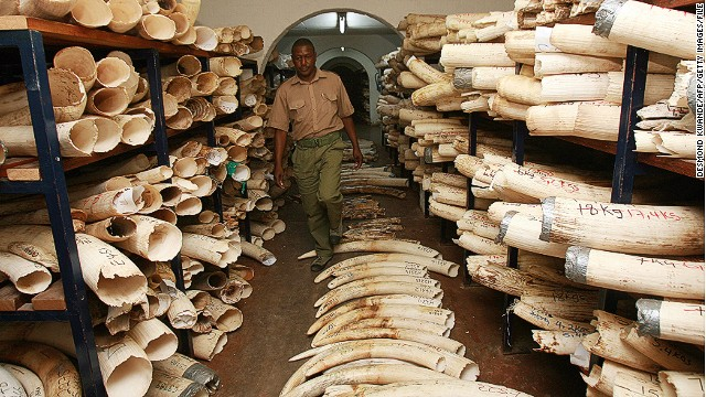 [File photo] Room with elephant tusks and rhino horns. Photo taken on October 12, 2010, Harare.