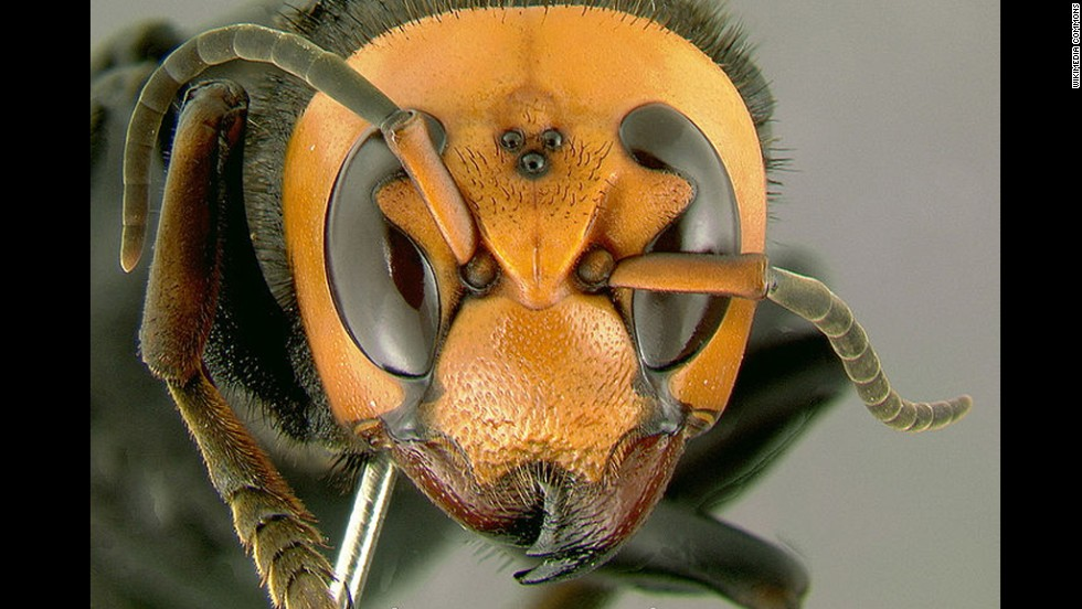 Killer hornets sting at least 19 people to death in China, nearly 600 stung