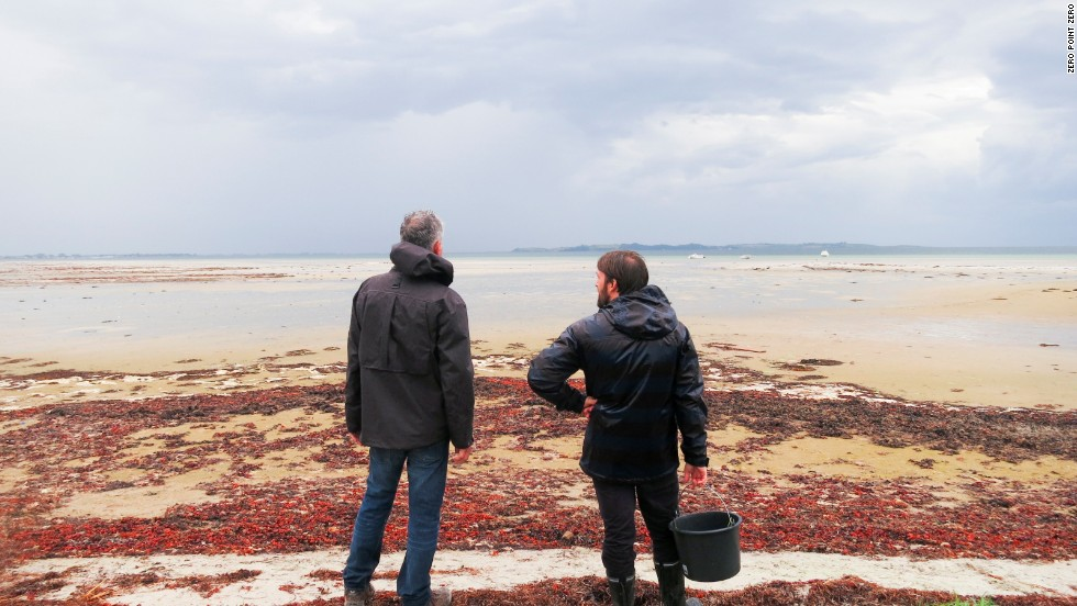 Bourdain and Redzepi search for beach plants and sea beans to serve at Noma.