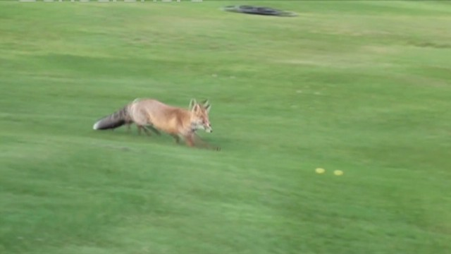 fox plays golf switzerland_00001526.jpg