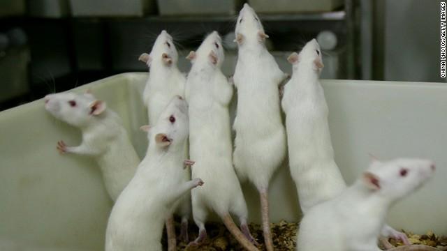 Le financement de la recherche sur les tissus fœtaux se poursuivra, assure l'agence aux scientifiques