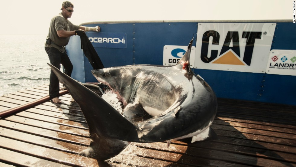 The 46-year-old comes face to face with sharks almost everyday, as part of his work with scientific research vessel Ocearch.