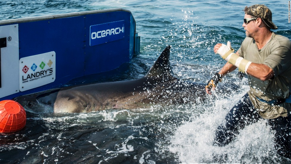 The team of scientists and sailors are on a mission to electronically tag sharks, in an effort to build a global map of their migration, breeding, and birthing habits.