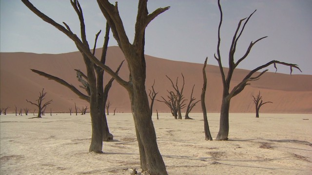 Namibian forest frozen in time