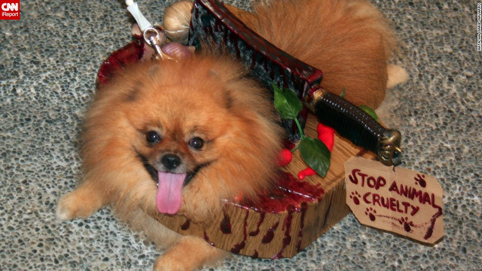 "Gory special effects need not be reserved for human costumes. Navarro's Pomeranian, Jacks, somehow looks <a href=""http://ireport.cnn.com/docs/DOC-870763"">scary and adorable</a> while wearing a meat cleaver -- and a message to stop animal cruelty."