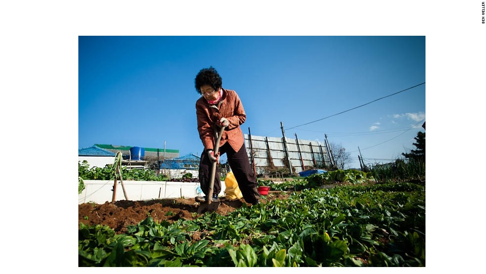 A farmer harvests produce from her small hillside plot in Busan, South Korea. More than half of South Korea's farmers are women and few farmers are young -- 40 percent are over 60 years old -- and most have seen their children and grandchildren move to other professions.