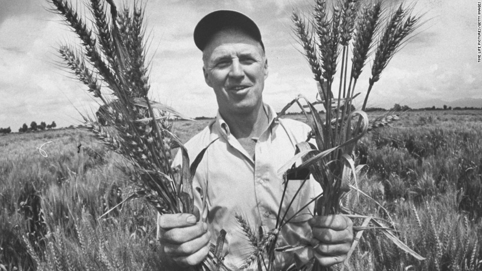 Dr. Norman Borlaug holds up stalks of his specifically crossbred wheat, designed to be more disease-resistant. Borlaug won the Nobel Peace Prize in 1970.
