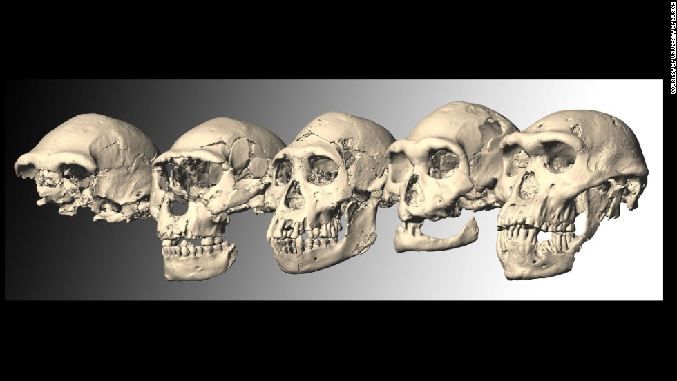 Researchers say that all of the five Dmanisi Homo skulls came from individuals in a single species. They say fossils classified as other Homo species from around this time, such as Homo habilis and Homo rudolfensis, may actually also be examples of Homo erectus.