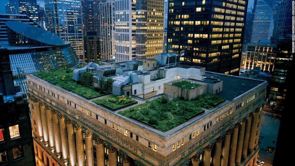 "Diane Cook photographed Chicago City Hall's award-winning green rooftop. ""I thought 'We're going to reveal a secret landscape to people.'  And it is really magical,"" she said."