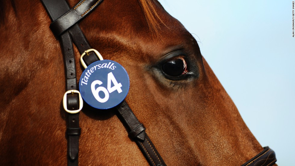 Each horse in question is given a lot number and potential purchasers can view the horse in question to make up their minds over its caliber before joining the bidding process.