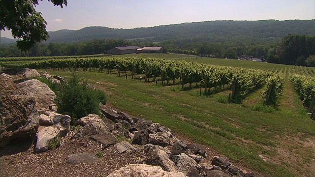 Move over, Napa! New Jersey wine booming