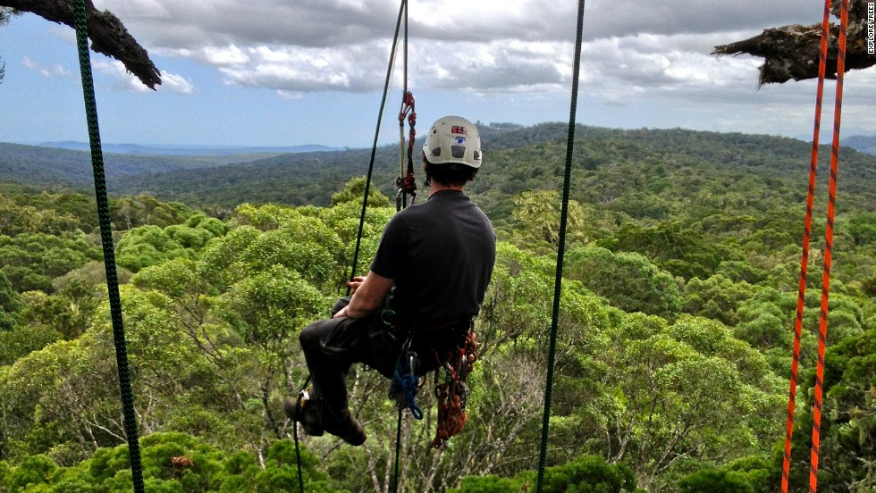 A group of international tree climbers has embarked on a mission to explore some of Africa's most spectacular trees.