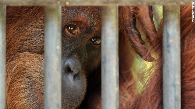 it is wrong to hold animals captive in zoos