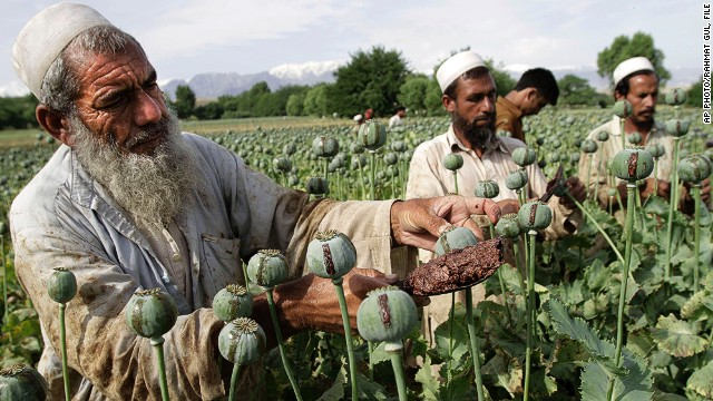In this May 10, 2013 file photo, Afghan farmers collect raw opium as they work in a poppy field in Khogyani district of Jalalabad, east of Kabul, Afghanistan.