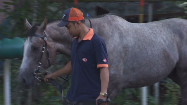 Is Singapore the best place to own horses?