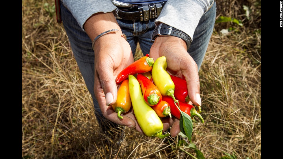 "Emmons holds a handful of peppers just picked by volunteers. Since 2008, her nonprofit, <a href=""http://www.sowmuchgood.org/"" target=""_blank"">Sow Much Good</a>, has grown more than 26,000 pounds of produce for underserved communities in Charlotte."