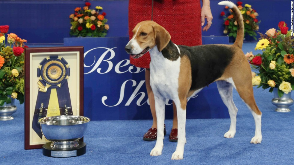 Westminster Dog Show Terrier Group Winner November