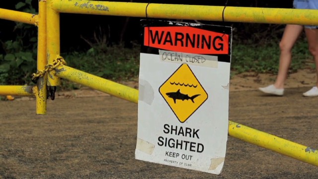 Man on kayak killed by shark