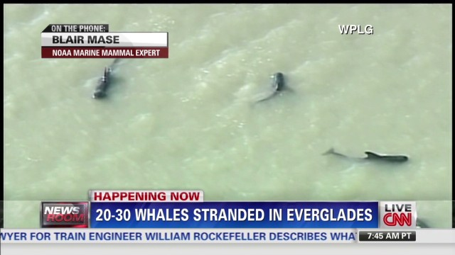 Whales stuck in shallow Everglades Park