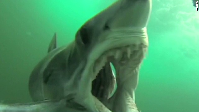 newday must see moment shark gopro feeding_00002609.jpg
