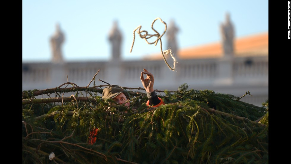 Workers at the Vatican set up the traditional Christmas tree in St. Peter's Square on December 5.