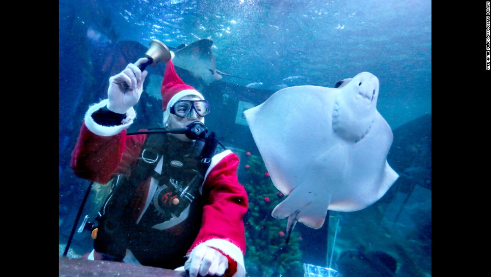 A diving Santa rings a bell next to a ray at the Sea Life Aquarium in Berlin on December 3.