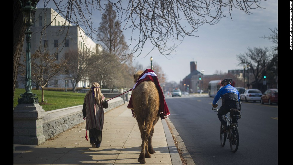 Kara Iden is watched by a police officer December 3 as she leads a camel to the Supreme Court to participate in a live nativity scene in Washington.