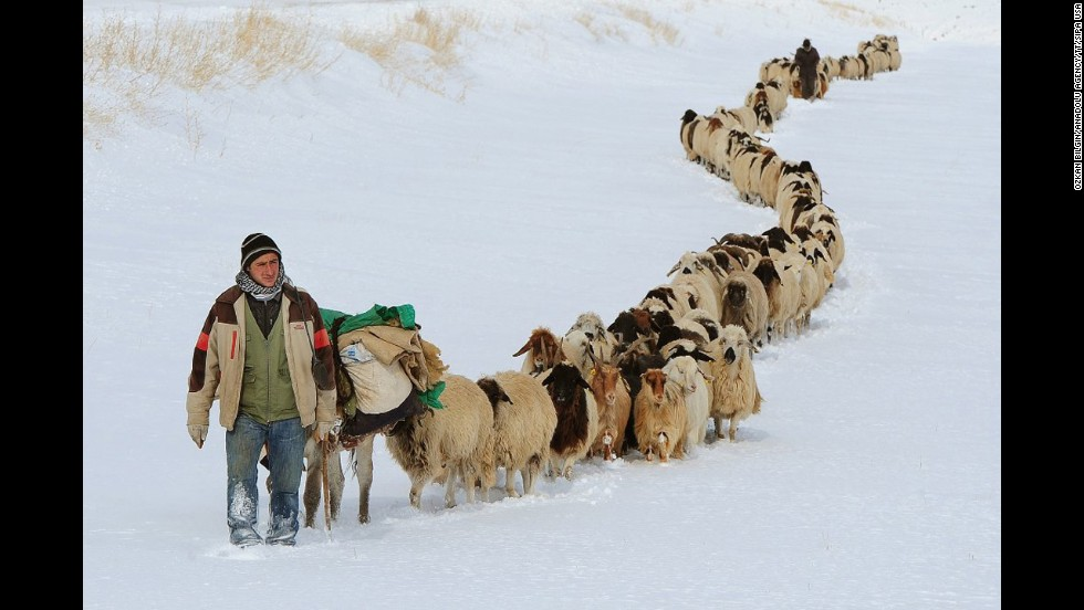 <strong>December 10:</strong>  Shepherds make their way back home with hundreds of sheep and horses after heavy snowfall in Van, Turkey.