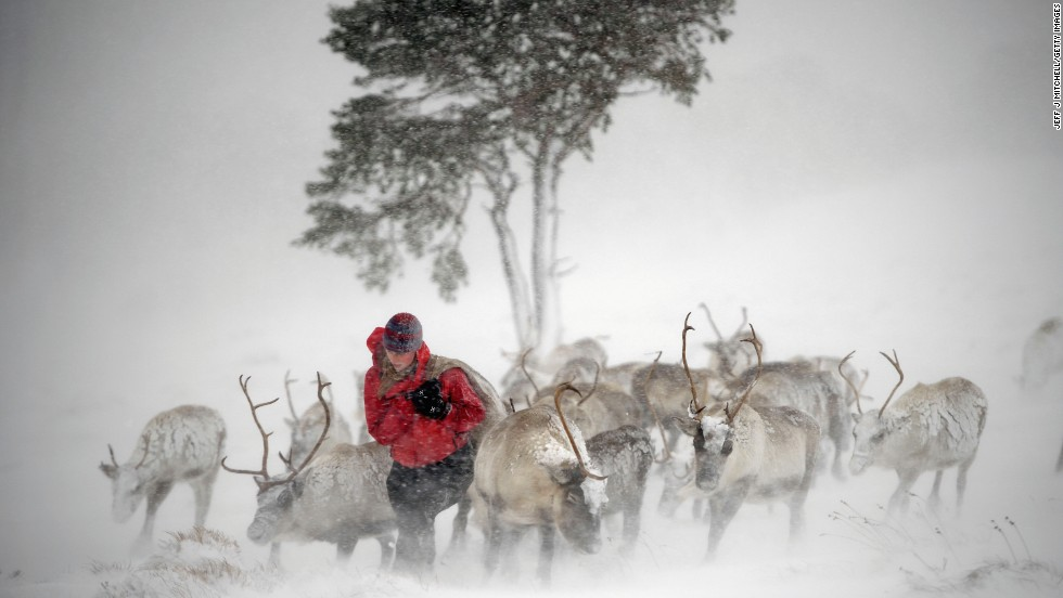 <strong>December 23:</strong> Eve Grayson, a reindeer herder, feeds animals in Aviemore, Scotland. A Swedish Sami reindeer herder introduced reindeer to Scotland in 1952.