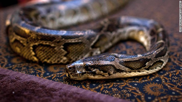 Python kills hotel security guard