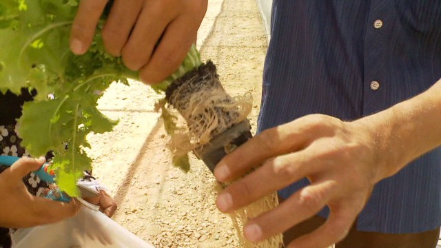 Egypt's farming revolution